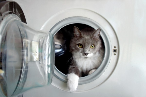 The cat and the washing machine